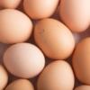 卵の賞味期限切れ